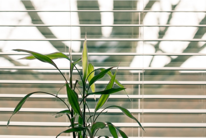 Right Blinds for Your Windows